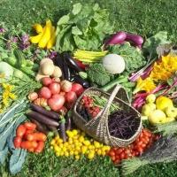 الزراعة العضوية أو الحيوية أو الـ أورجانيك